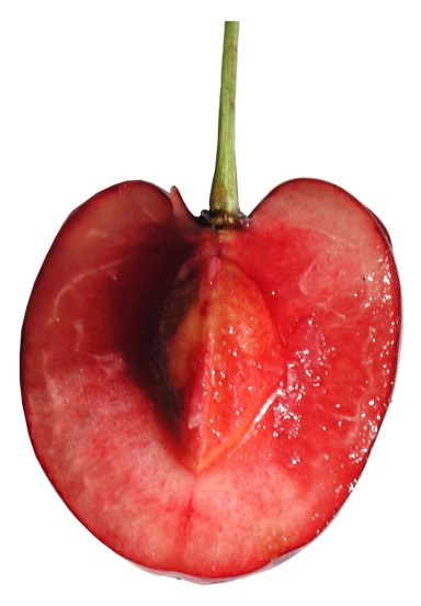 Cross-section_cherry