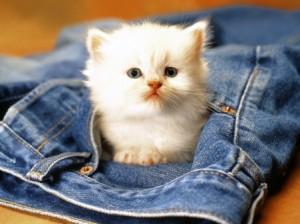 portable-cat-in-pocket_1204833148