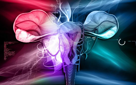 uterusfeatured